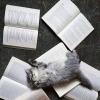 Gatto... Complesso... :)