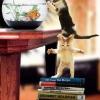 Gattini... Libridinosi ;D