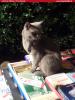 Gatti e libri -  La libreia dell'isola